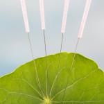 Accupuncture Nasturnium leaf